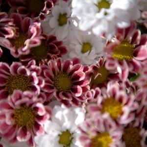 Осторожно цветы