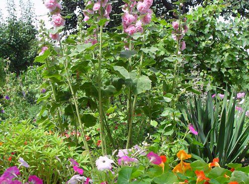 Летний сад (красочный миксбордер)