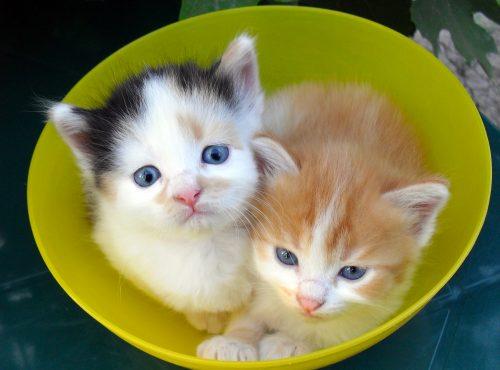 Приучение котёнка к лотку