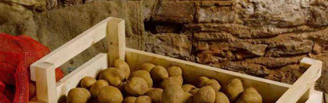 hraneniyu-kartofelya